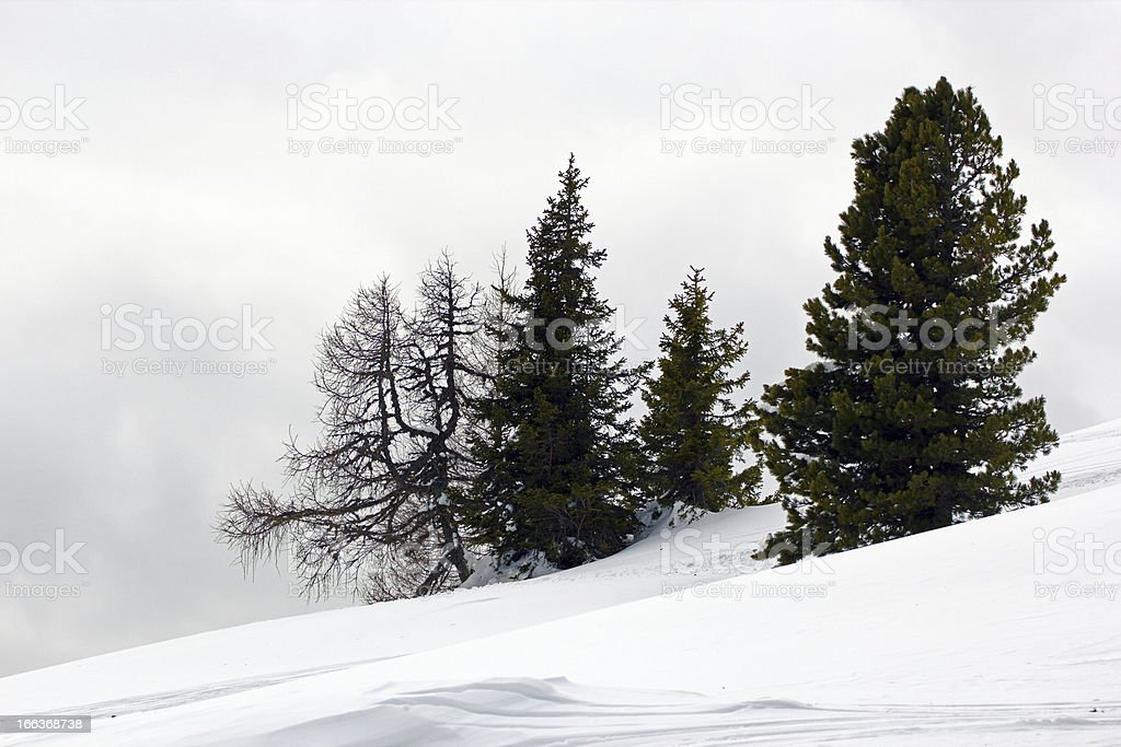 foggy morning up in the mountains royalty-free stock photo