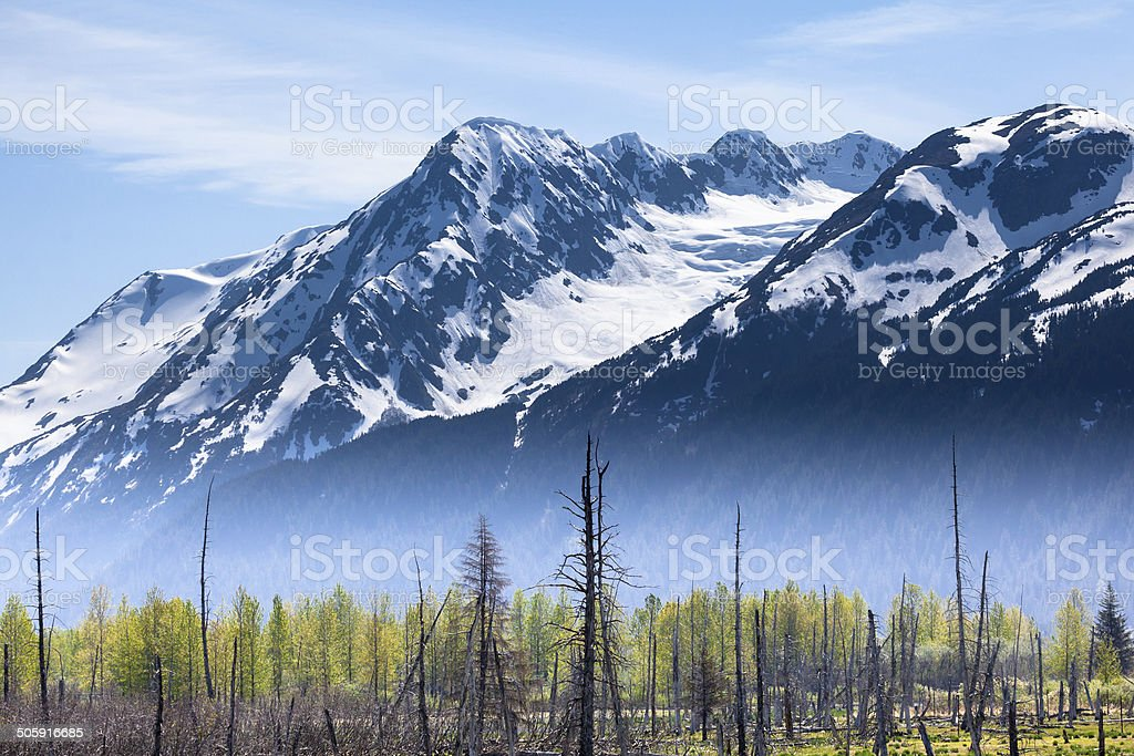 Foggy Mountains and Forest stock photo