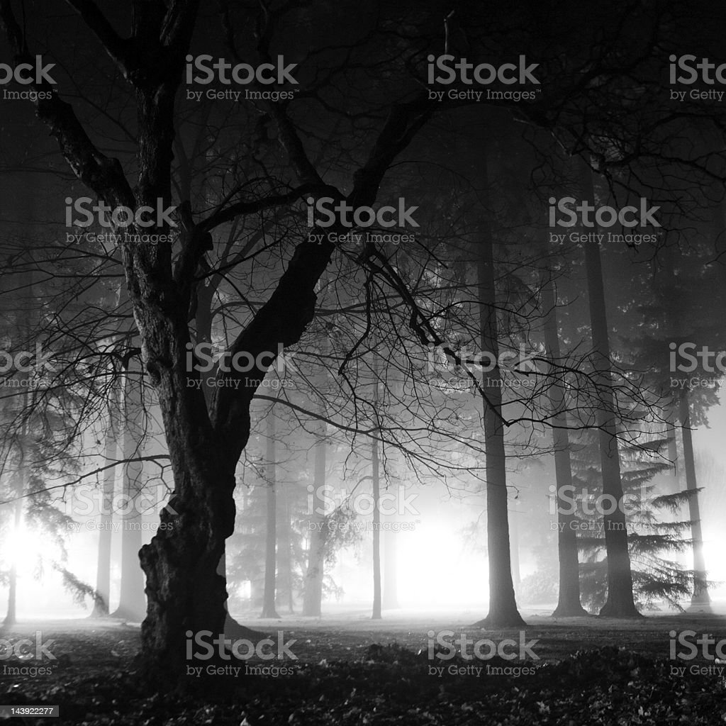Foggy night in the forest royalty-free stock photo