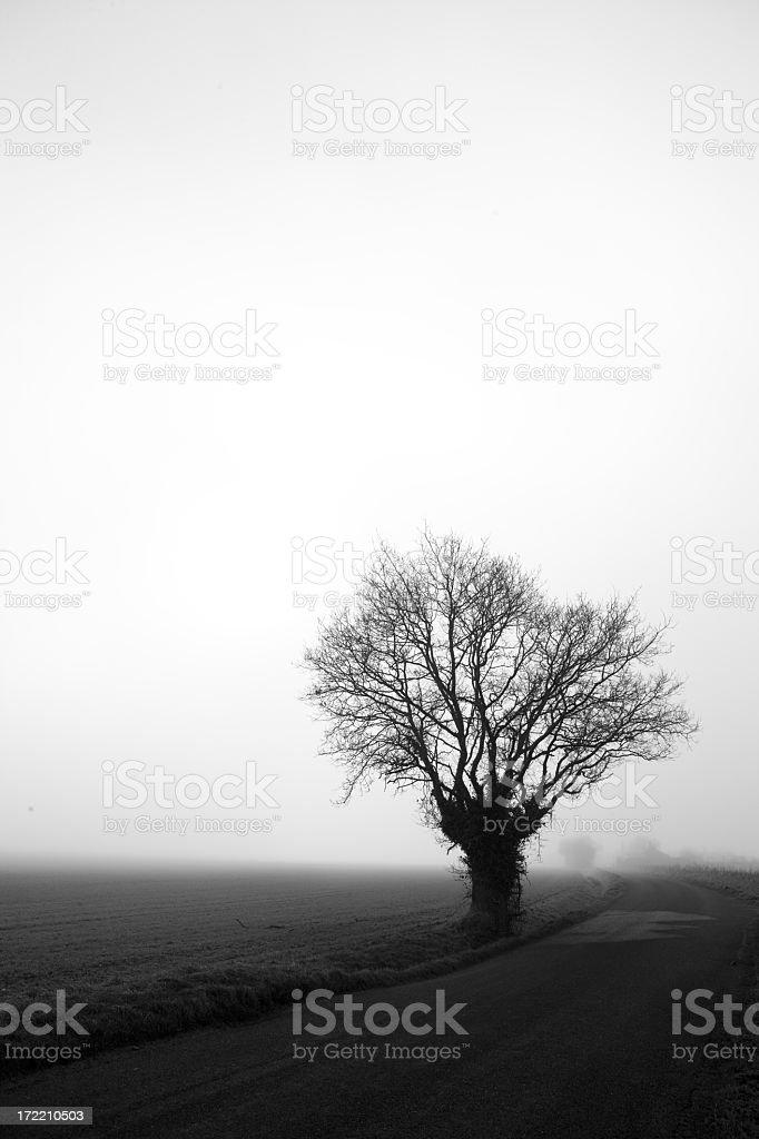 Foggy Norfolk winter landscape royalty-free stock photo