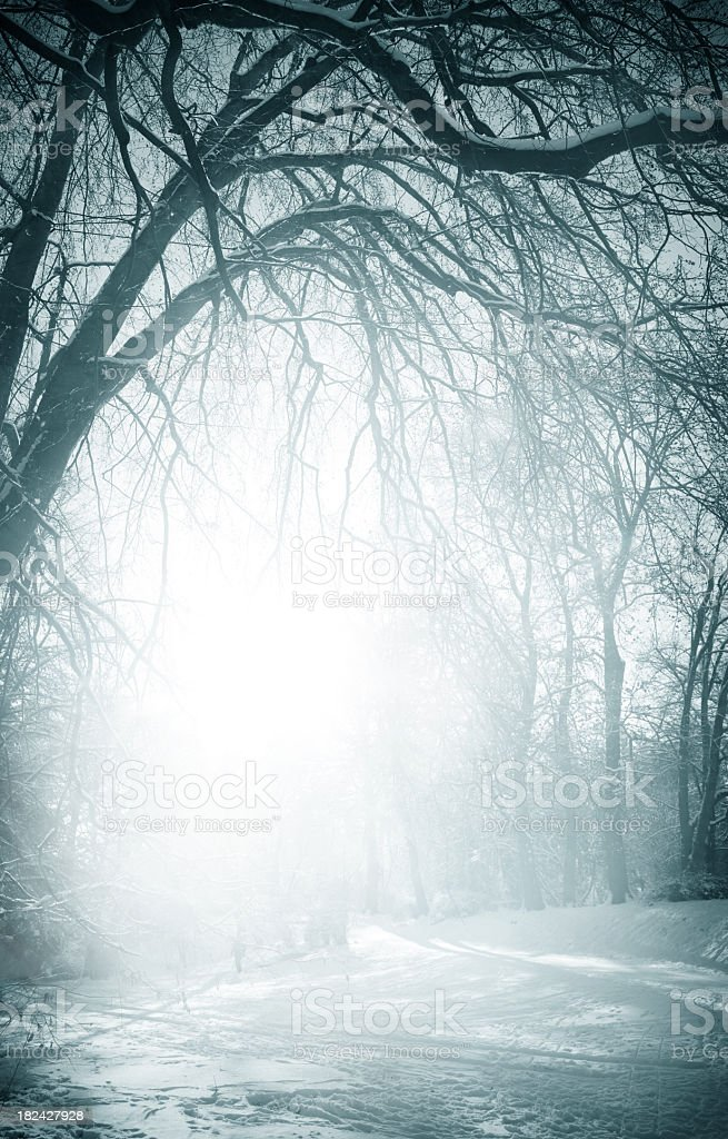 Foggy old trees near the road in winter stock photo