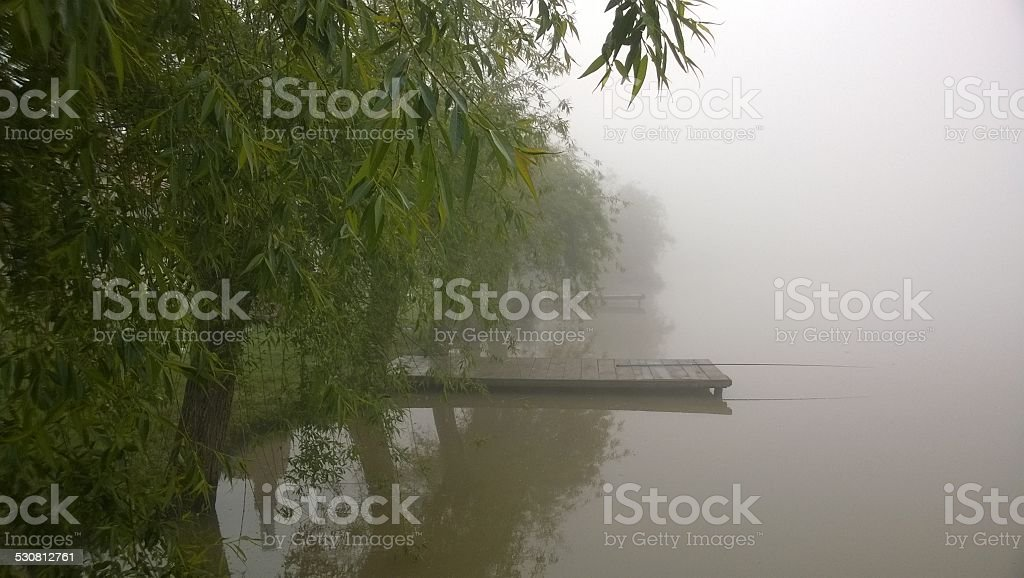 Foggy pond and willow trees royalty-free stock photo