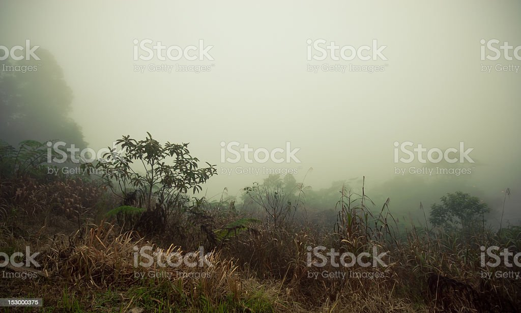 Foggy rainforest scene stock photo