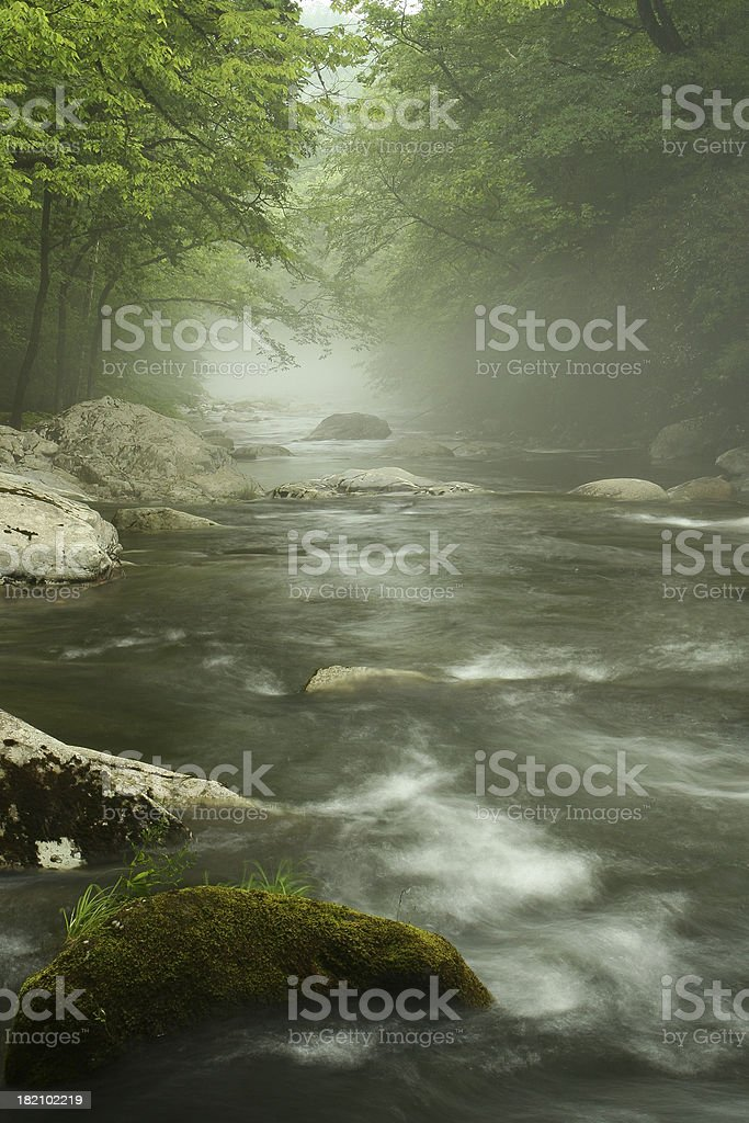Foggy River royalty-free stock photo