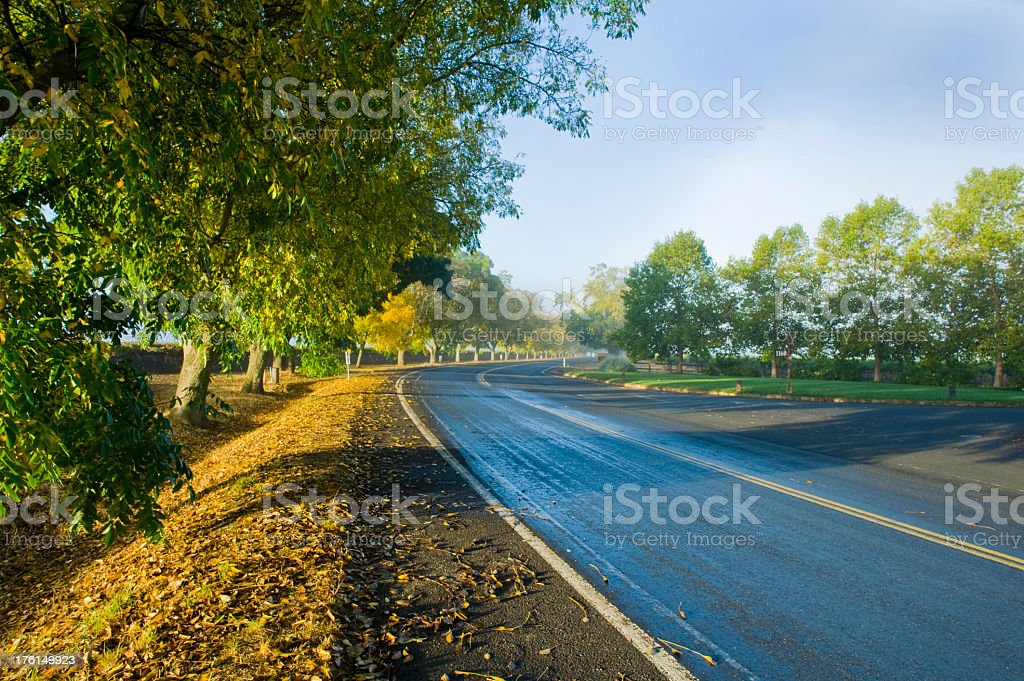 Foggy road in Napa California at sunrise royalty-free stock photo