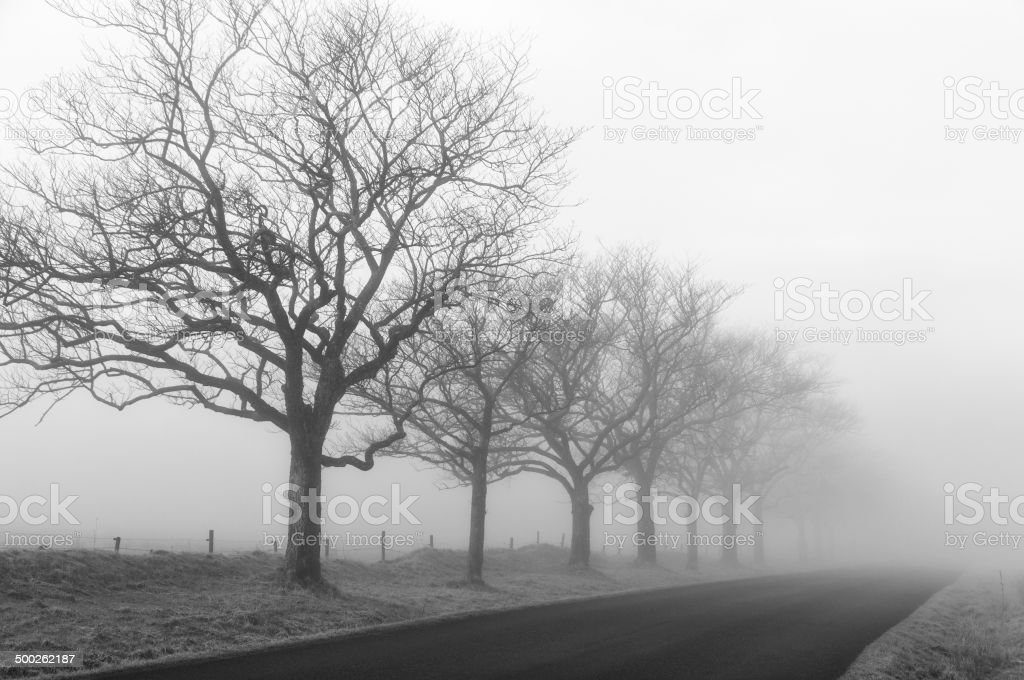 Foggy road stock photo