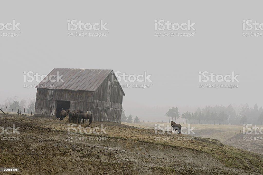 Foggy Rural Scene royalty-free stock photo