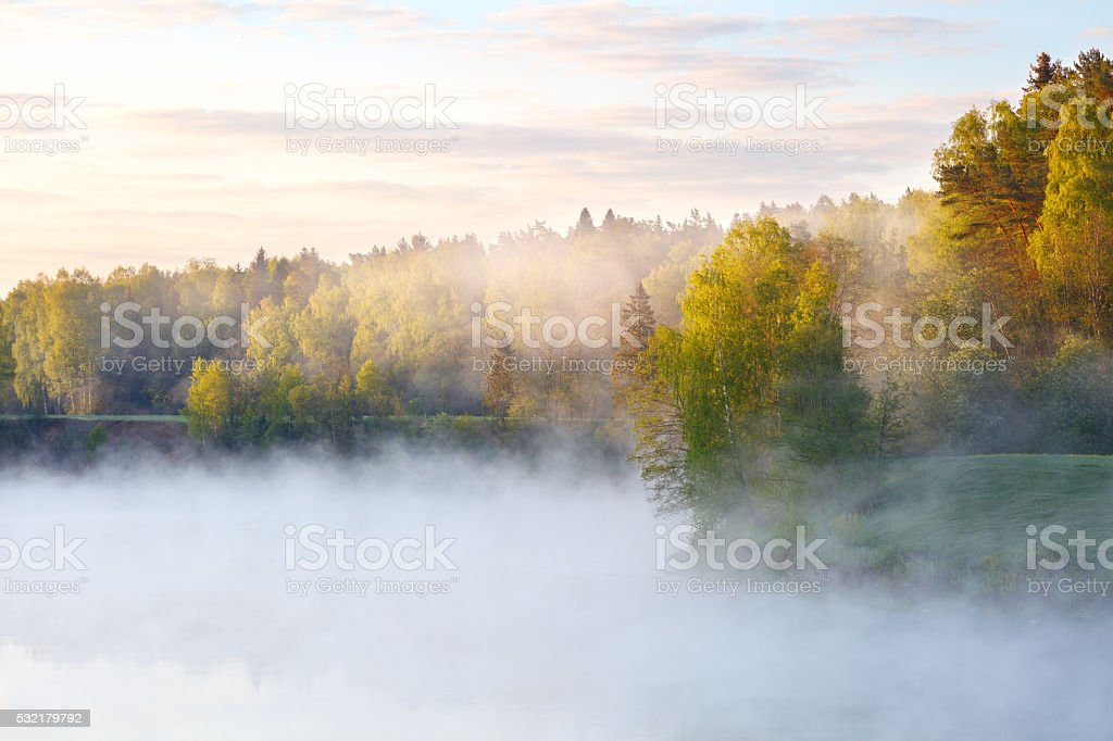 Foggy summer morning with birdsong stock photo