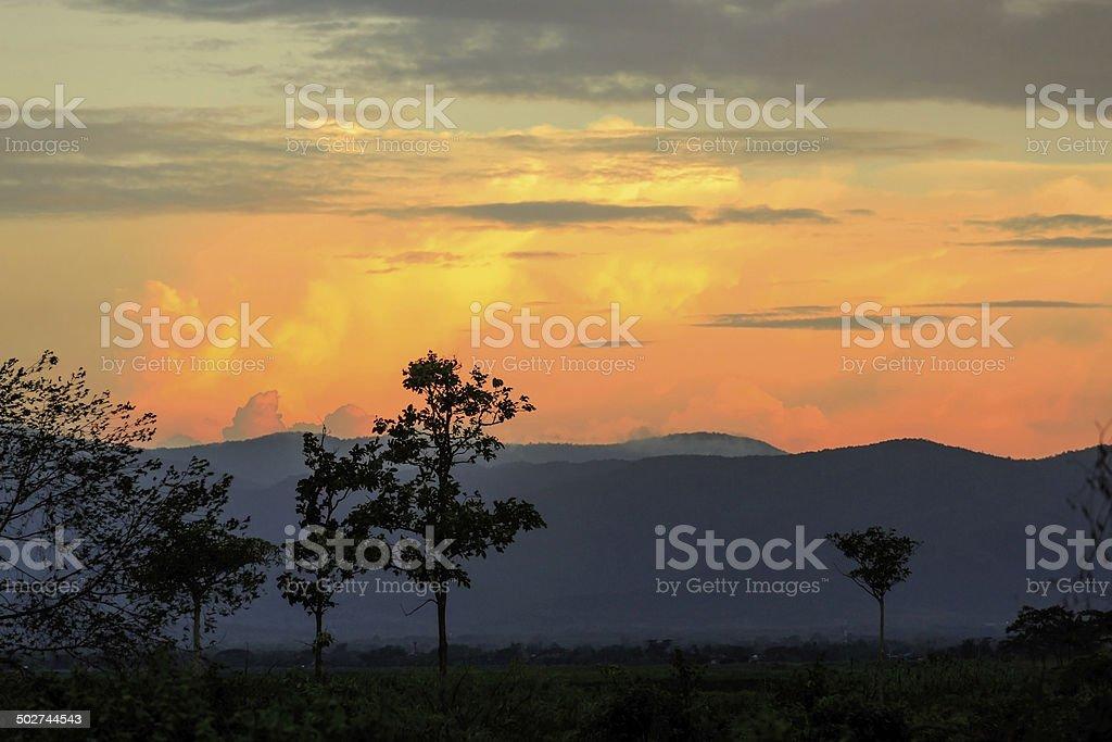 Foggy sunrise. Wald mit Nebel.  Lichter von den Wald. wunderschönen morni Lizenzfreies stock-foto
