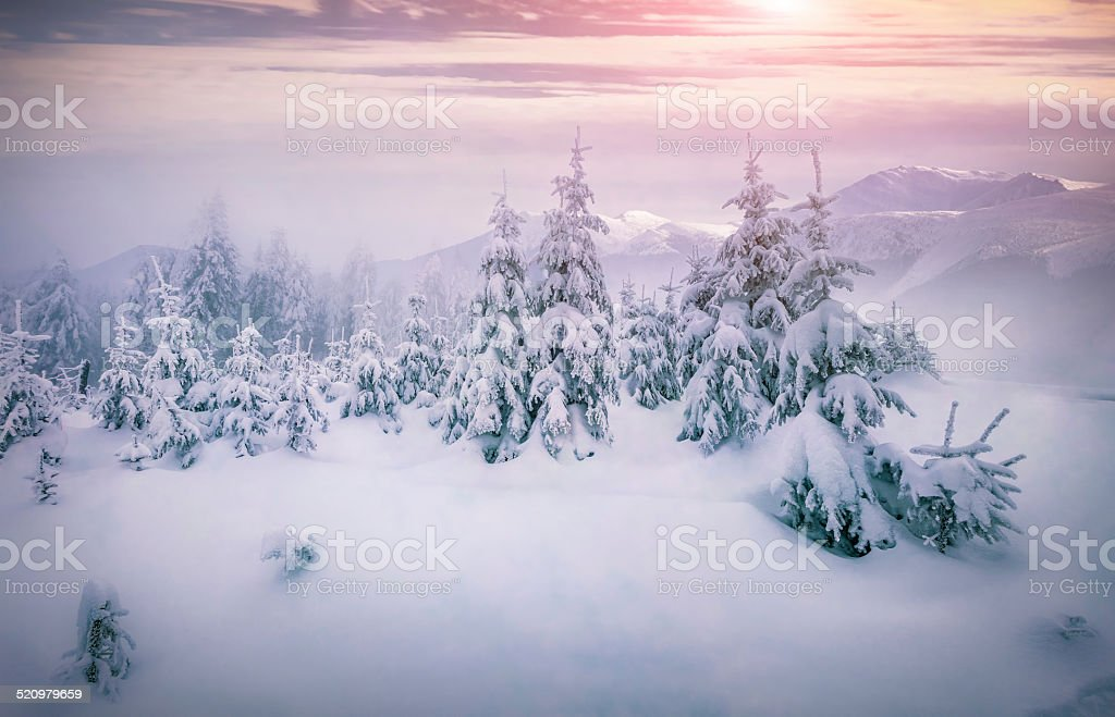 Foggy sunrise in a winter mountains stock photo