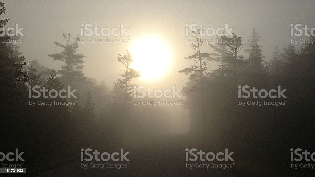 Foggy Sunrise in the Woods royalty-free stock photo