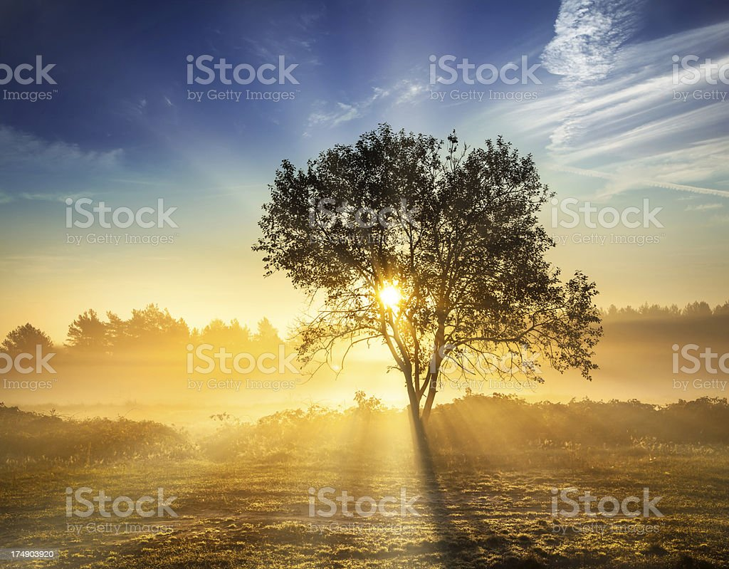 Foggy sunrise - Lonely tree and Sun stock photo
