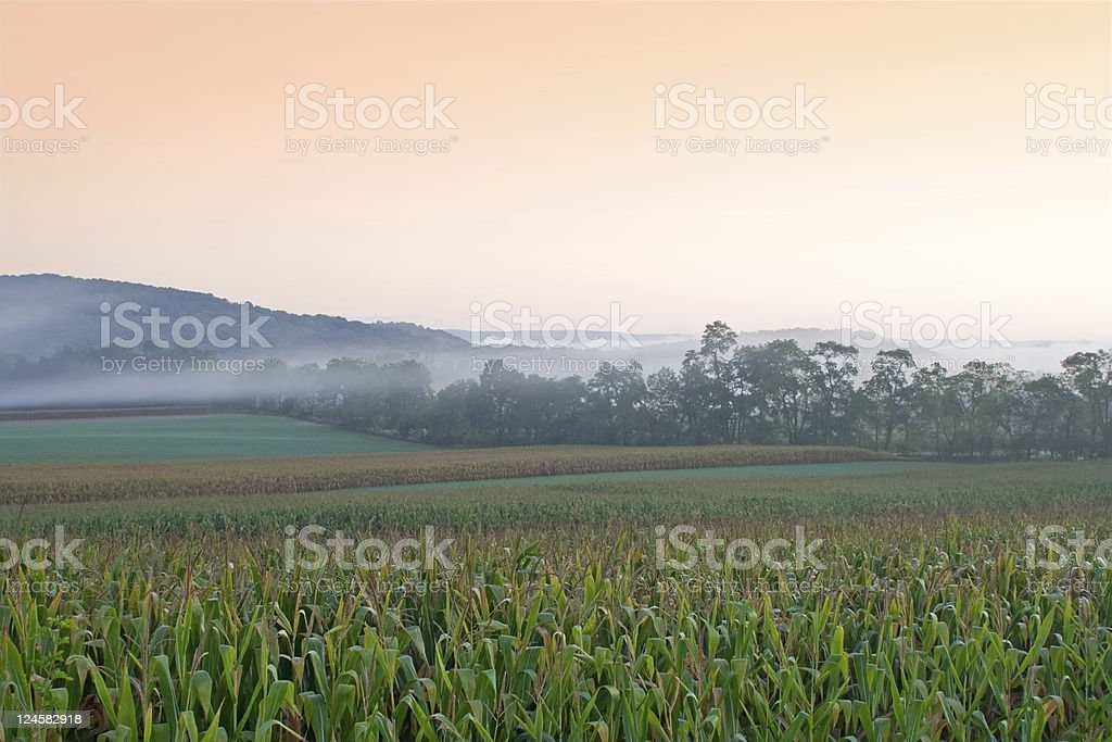 Foggy Sunrise on Cornfield stock photo