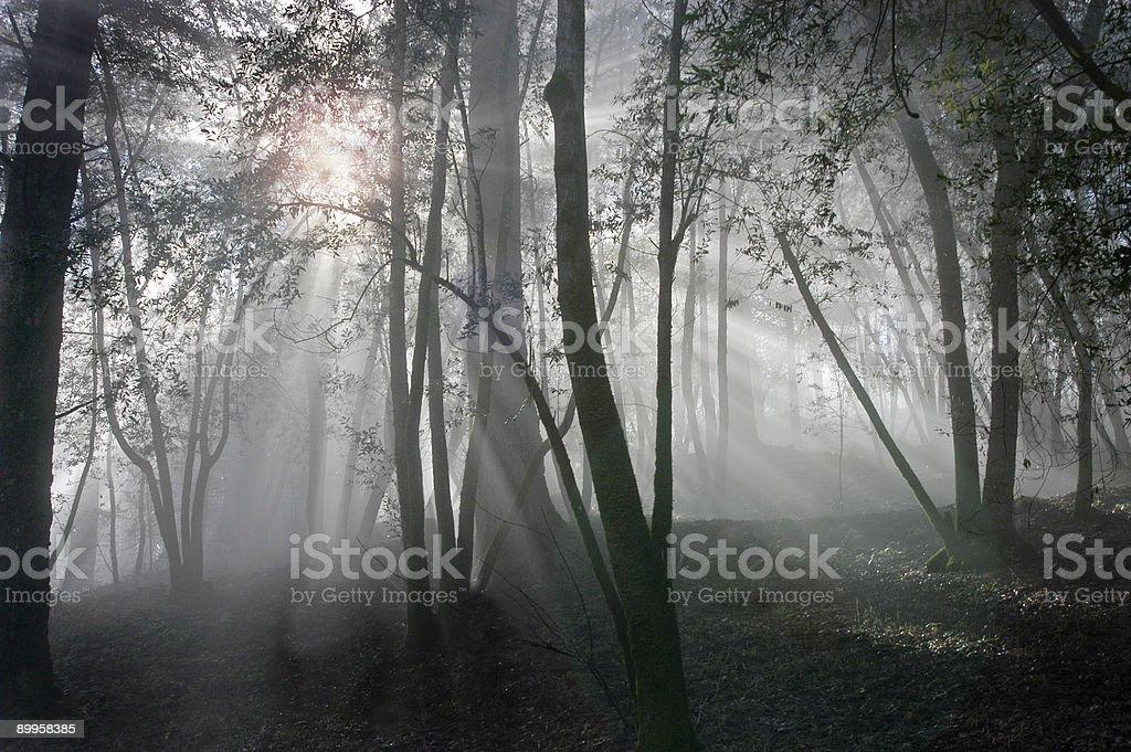 Niebla sunrise foto de stock libre de derechos