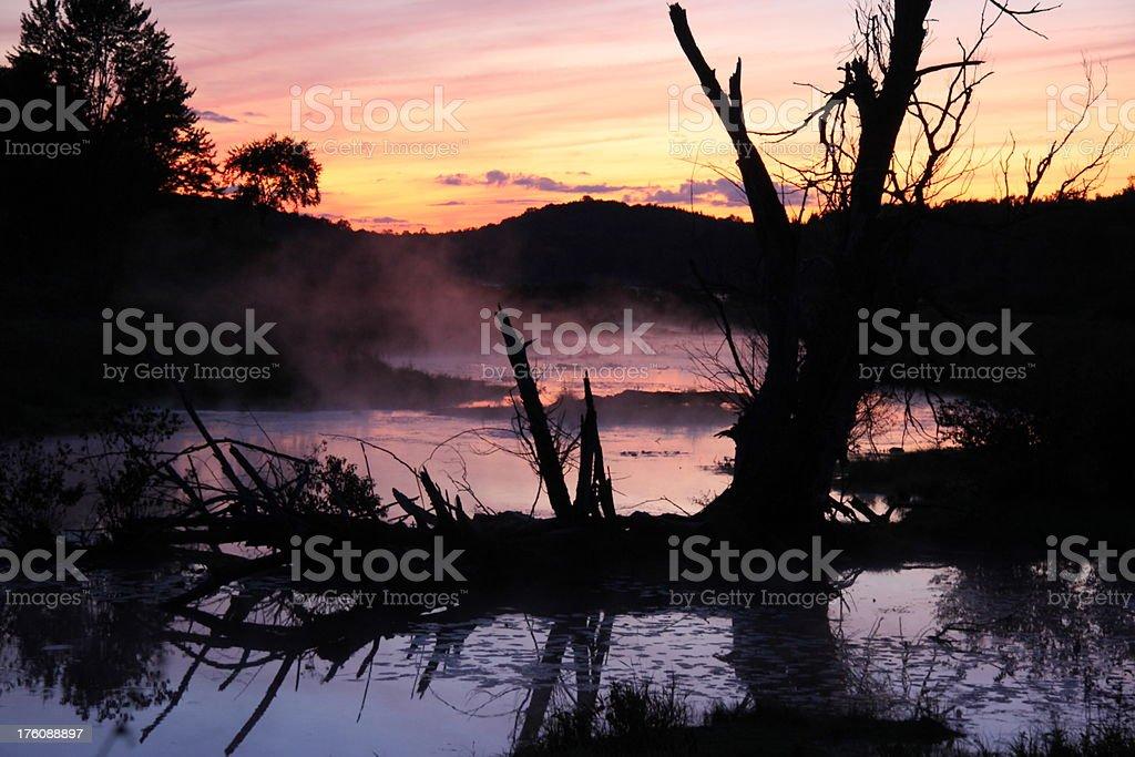 Foggy Swamp at Sunset royalty-free stock photo