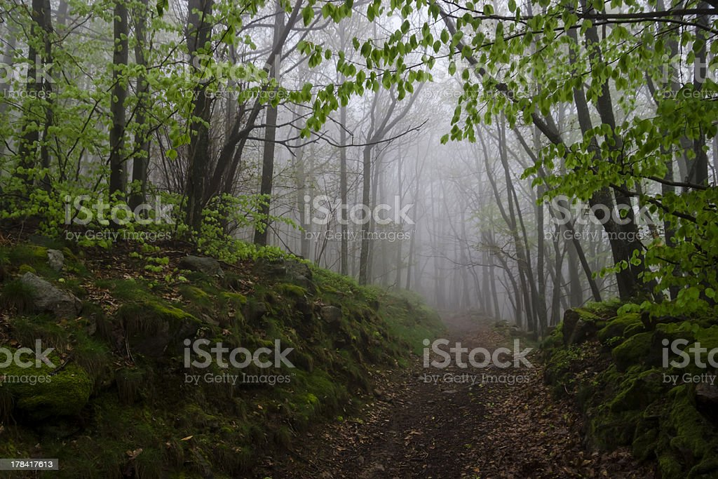 foggy track in a wild spring forest, France royalty-free stock photo