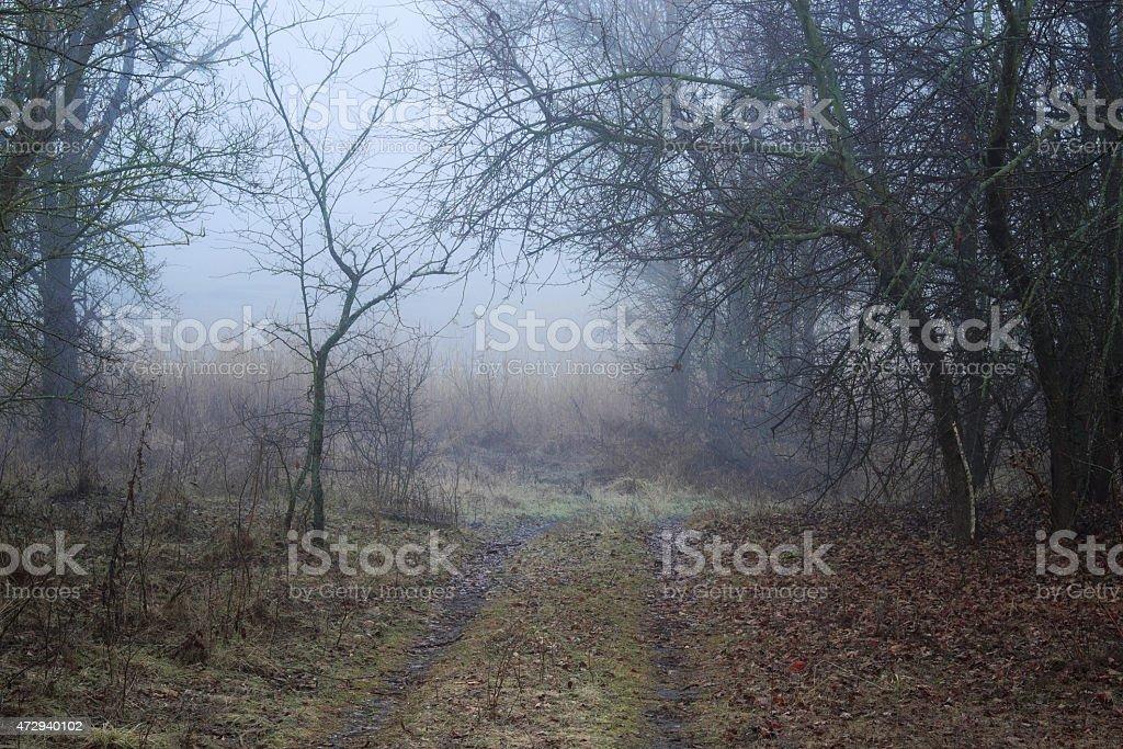 Niebla trail foto de stock libre de derechos