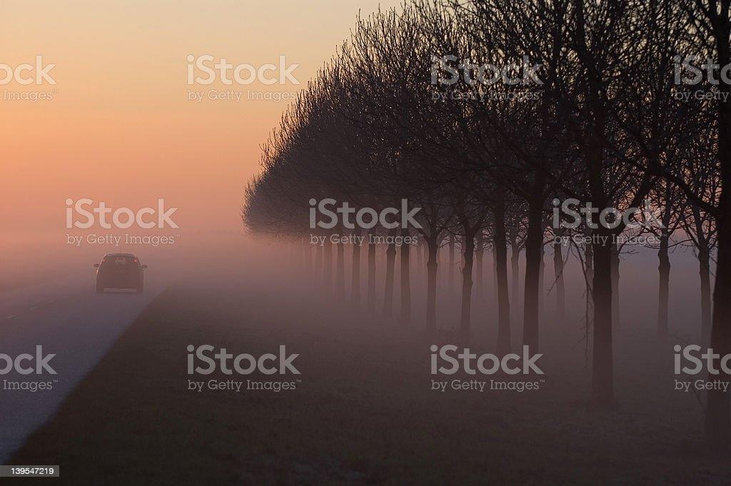 foggy tree royalty-free stock photo