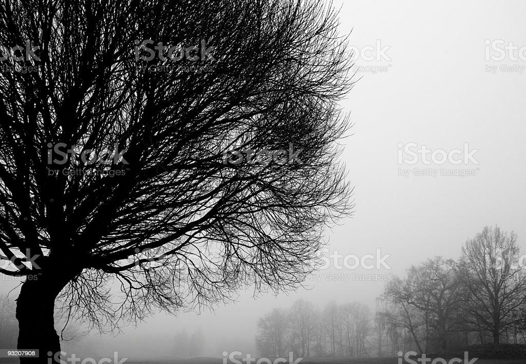 Foggy tree silhouettes royalty-free stock photo