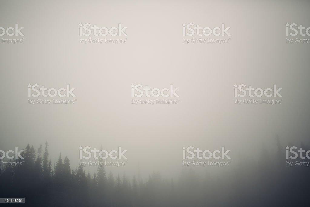 Foggy treeline stock photo
