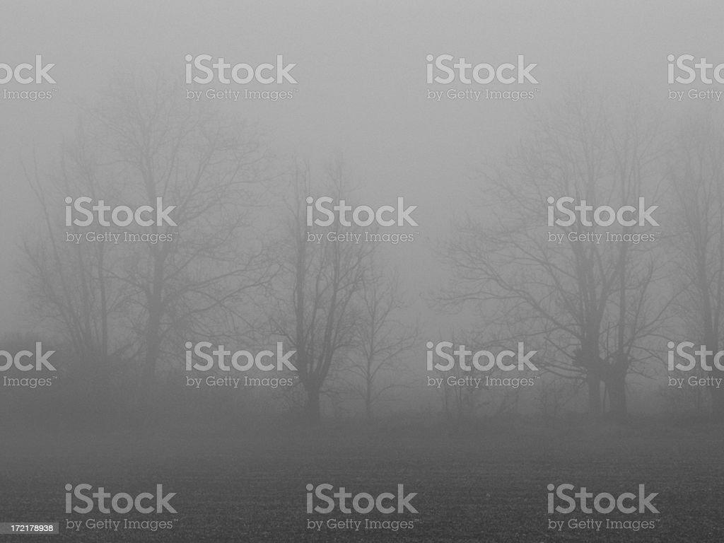 Foggy Trees royalty-free stock photo