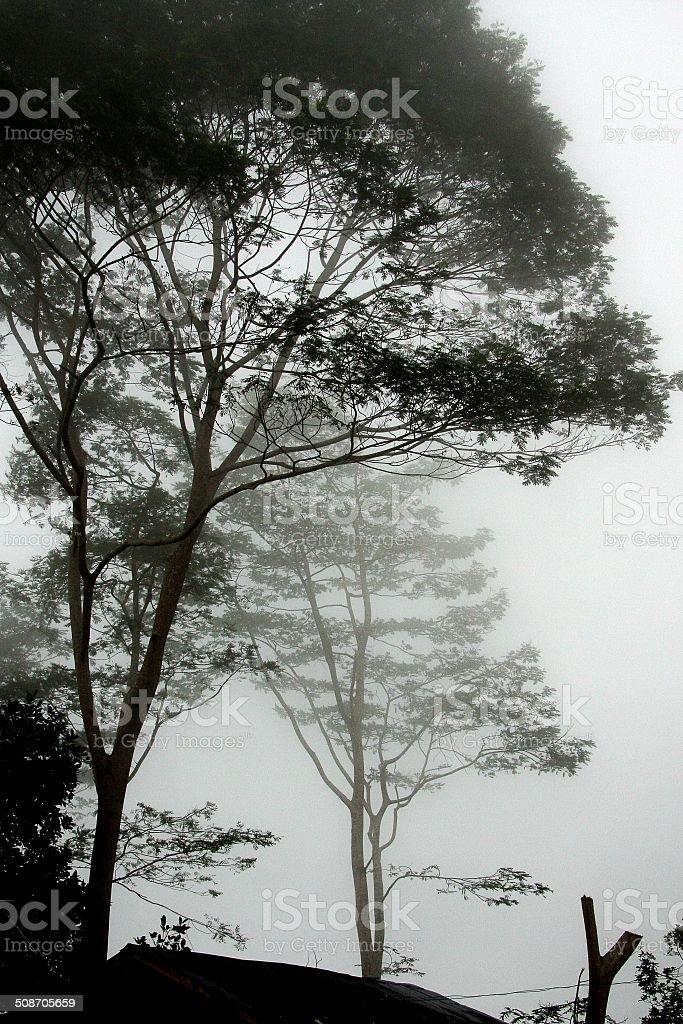 Foggy trees stock photo