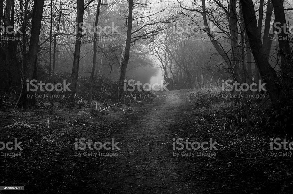 Foggy Walk stock photo