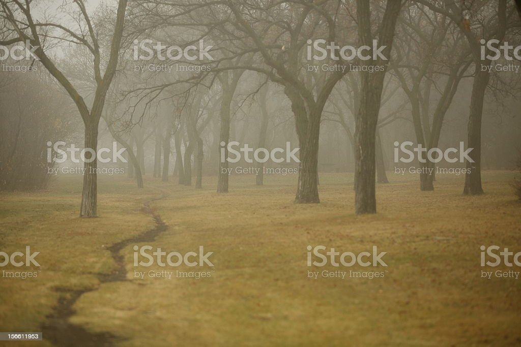 Foggy Walk Through the Trees royalty-free stock photo