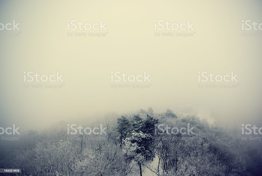 Foggy winter forest royalty-free stock photo
