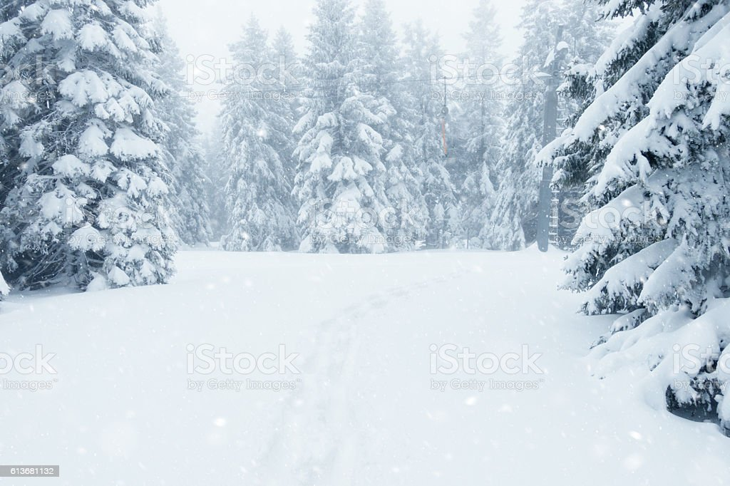 Foggy Winter Forest stock photo