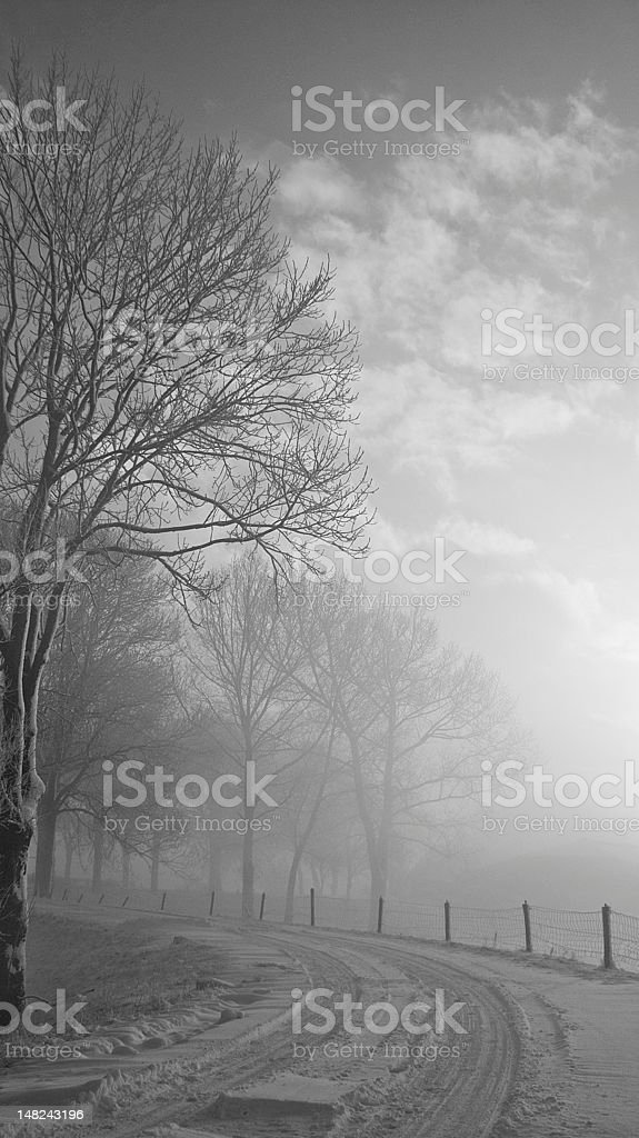 foggy winter morning royalty-free stock photo