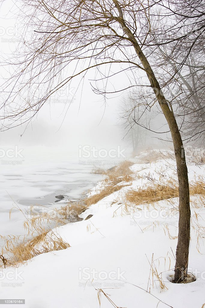 Foggy Winter Riverbank royalty-free stock photo