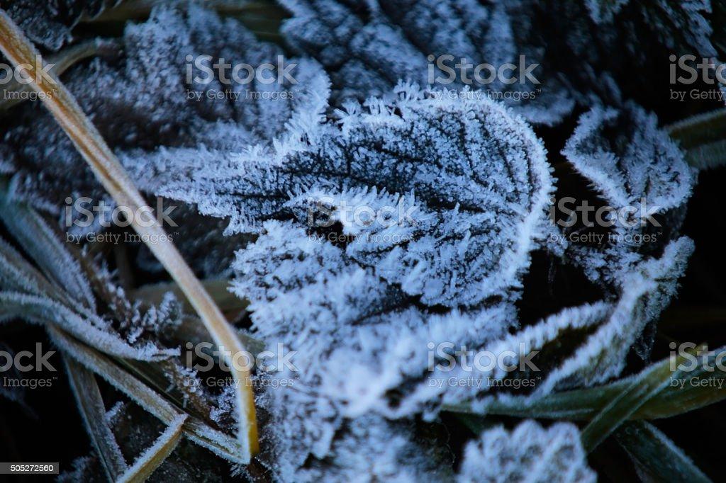 Foglie ghiacciate royalty-free stock photo