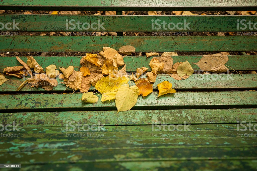 Foglie su una panchina. stock photo