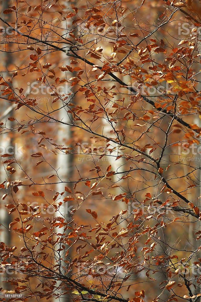 Foliage 01 stock photo