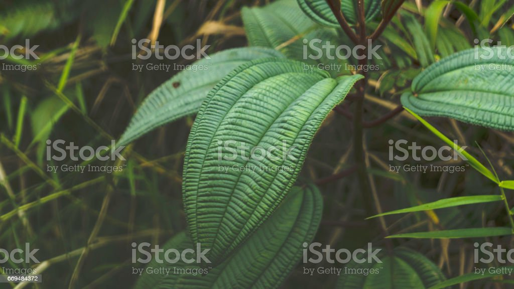 Foliage at El Yunque National Park Rainforest stock photo