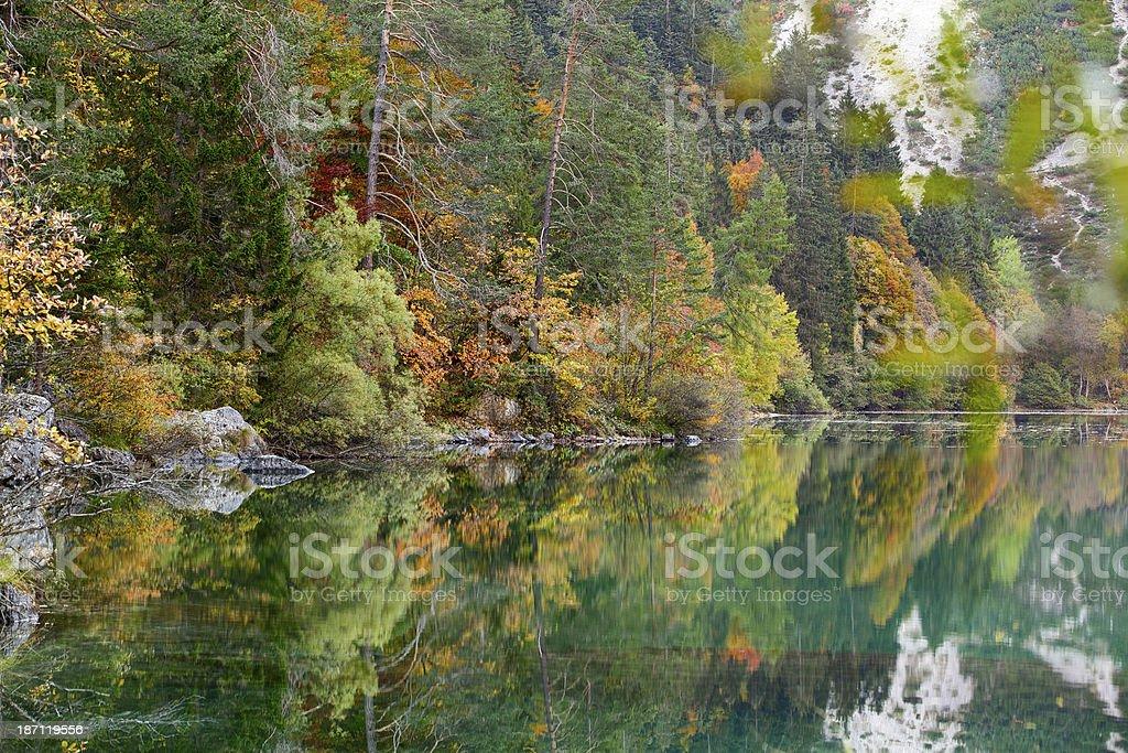 Foliage at Lake Tovel. Trentino-Alto Adige. Italy. stock photo