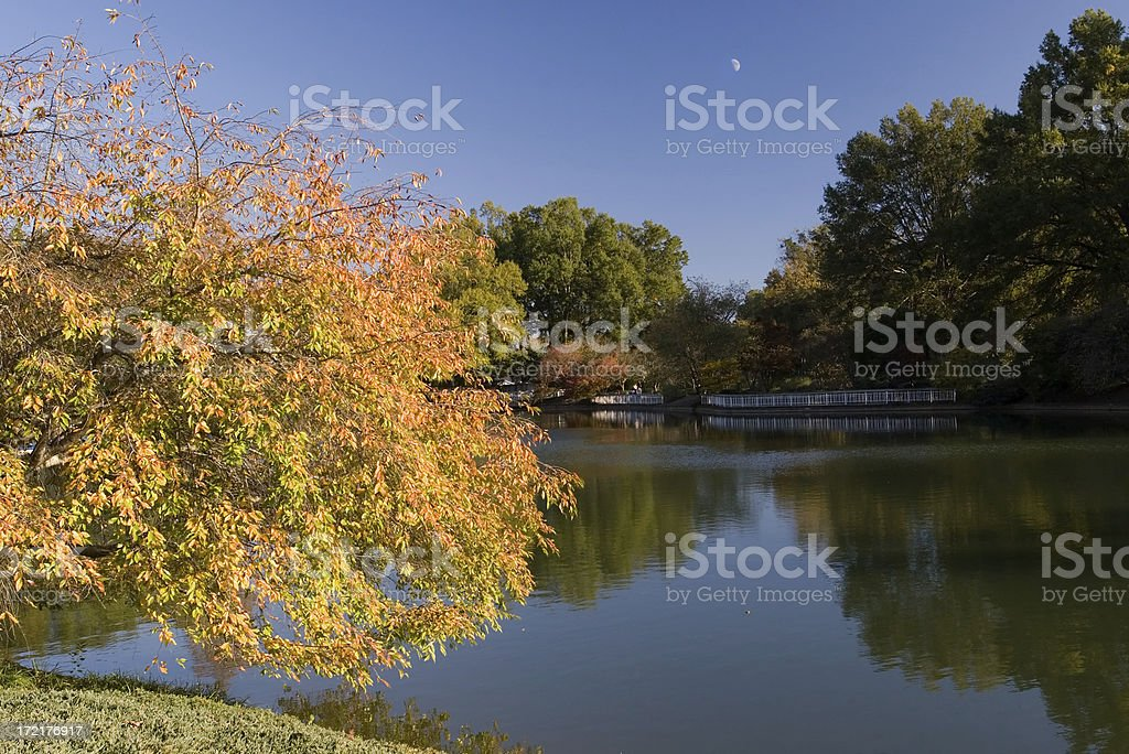 Foliage at Pullen Park royalty-free stock photo