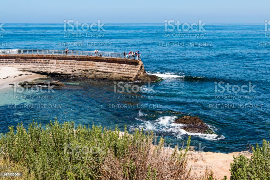 Foliage Atop a Cliff Overlooking the La Jolla Children's Pool stock photo