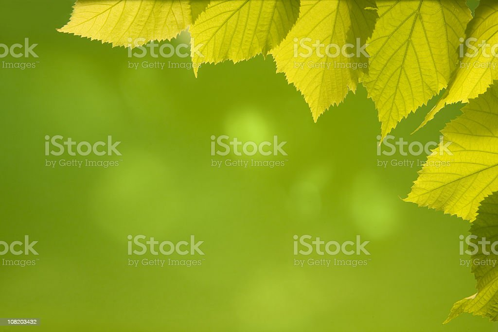 foliage background royalty-free stock photo