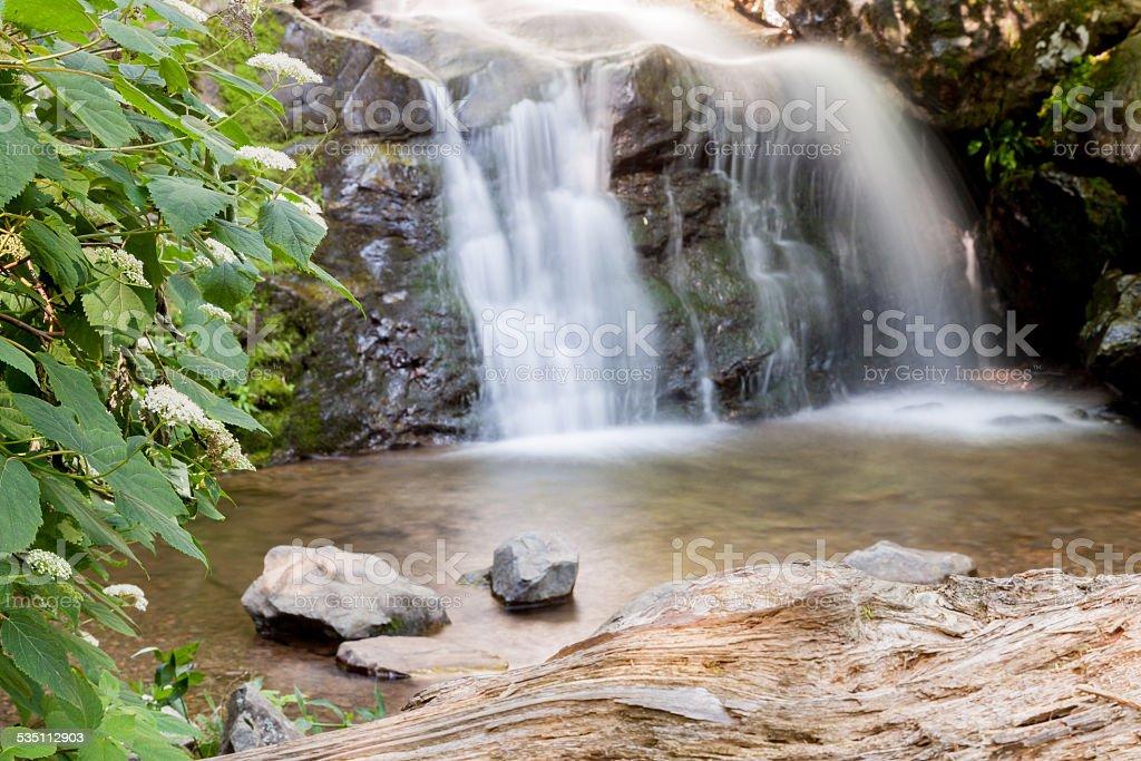 Foliage Falls stock photo