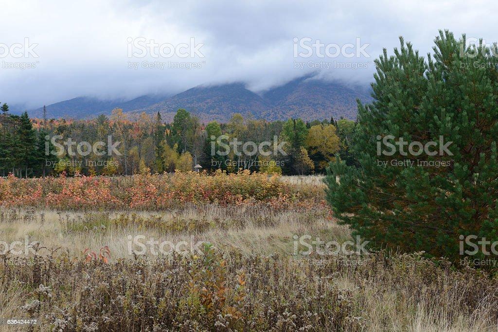 Foliage in Autumn stock photo