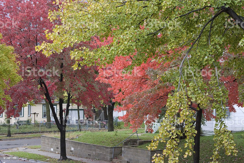 Foliage In The City stock photo
