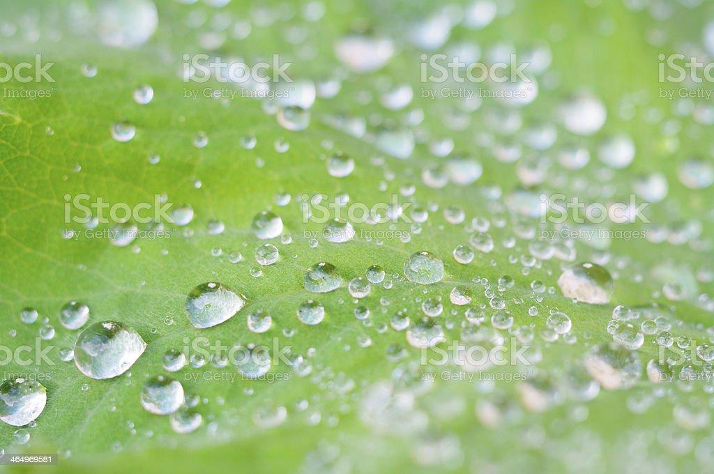 foliage lotus effect royalty-free stock photo