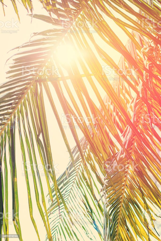Foliage of Coconut palm tree with Retro Filtered stock photo