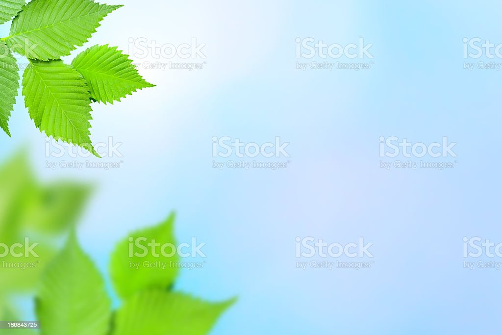 Foliage on defocused background royalty-free stock photo