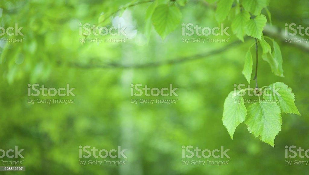 Foliage on defocused background stock photo