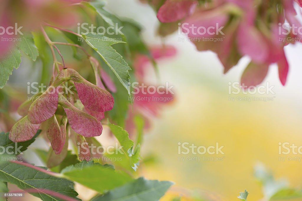 Foliage stock photo