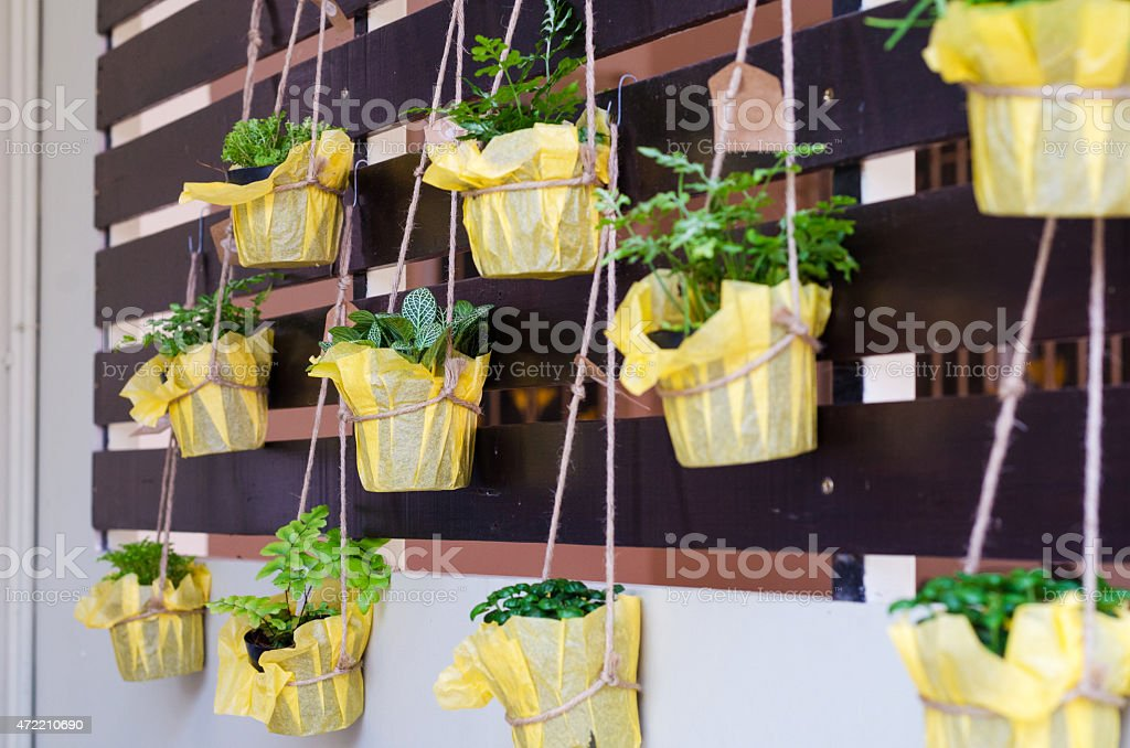 Foliage plant in pots hang on battens stock photo