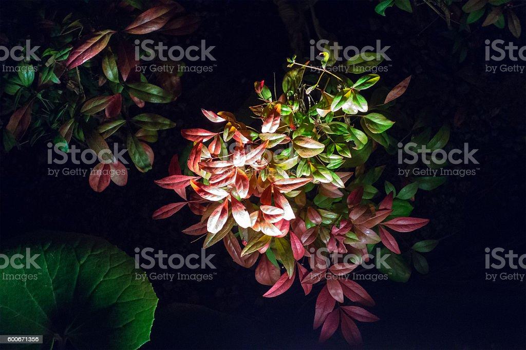 Foliage plants royalty-free stock photo